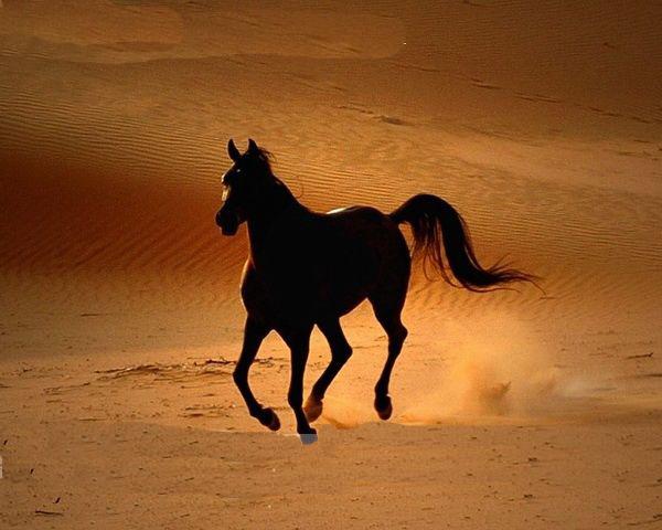 最貴的馬 世界上最貴的手機 布加迪威龍最貴的一款圖片